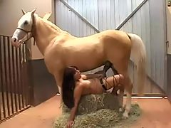 Real horse sex with girl
